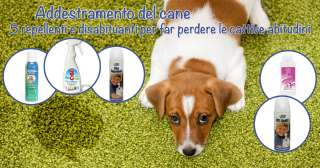 Addestramento del cane: 5 repellenti e disabituanti per far perdere le cattive abitudini
