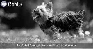 Il primo cane da terapia della storia