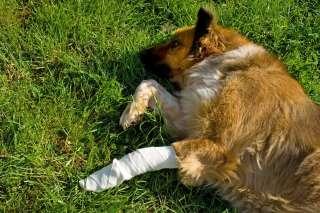 Coprire le medicazioni del cane: ecco 5 prodotti utili