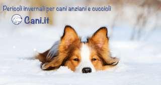 Pericoli invernali per cani anziani e cuccioli
