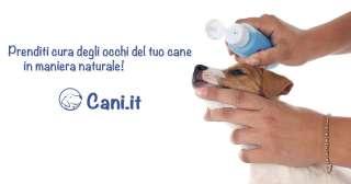 Prenditi cura degli occhi del tuo cani in maniera naturale