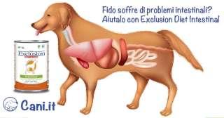 Fido soffre di problemi intestinali?