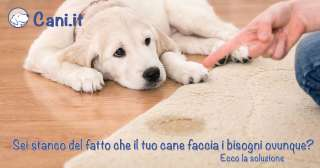 Sei stanco del fatto che il tuo cane faccia i bisogni ovunque? Ecco la soluzione!