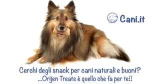 Cerchi degli snack per cani naturali e buoni? Orijen Treats è quello che fa per te!