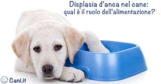 Displasia d'anca nel cane: qual è il ruolo dell'alimentazione?