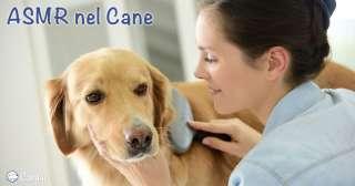 ASMR nel cane