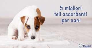 5 migliori teli assorbenti per cani