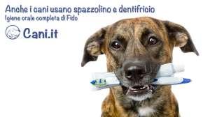Anche i cani usano spazzolino e dentifricio: igiene orale completa di Fido