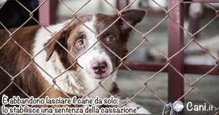 È abbandono lasciare il cane da solo: lo stabilisce una sentenza della cassazione