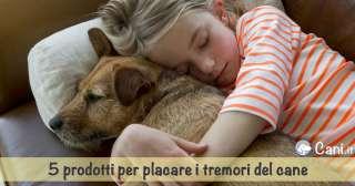 5 prodotti per placare i tremori del cane
