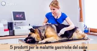 5 prodotti per le malattie gastriche del cane