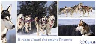 8 razze di cani che amano l'inverno