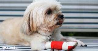5 prodotti per disinfettare una ferita del cane