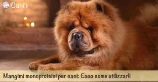 Mangimi monoproteici per cani