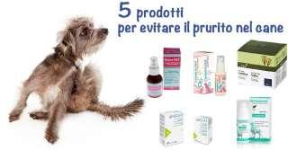 5 prodotti per evitare il prurito nel cane