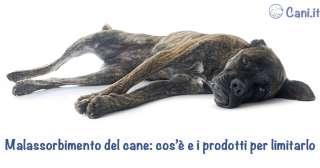 Malassorbimento del cane