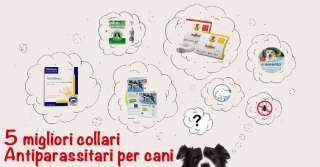 5 migliori collari antiparassitari per cani