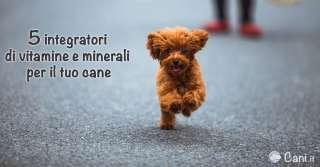 5 integratori di vitamine e minerali per il tuo cane