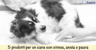 5 prodotti per un cane con stress, ansia o paura