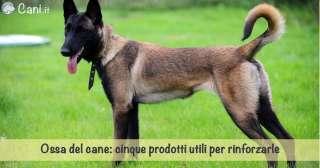 Ossa del cane: cinque prodotti utili per rinforzarle
