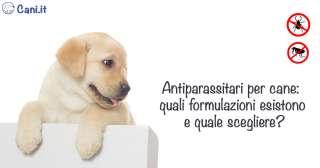 Antiparassitari per cane: quali formulazioni esistono e quale scegliere?