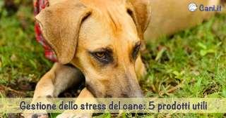 Gestione dello stress del cane: 5 prodotti utili
