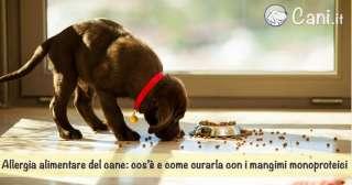 Allergia alimentare del cane: cos'è e come curarla con i mangimi monoproteici