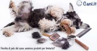 Perdita di pelo del cane: esistono prodotti per limitarla?