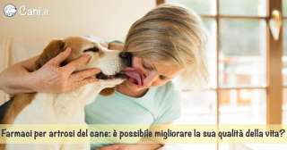 Farmaci per artrosi del cane: è possibile migliorare la sua qualità della vita?