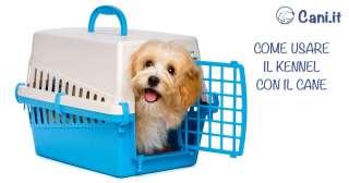 Come usare il kennel con il cane