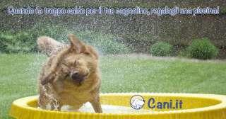 Quando fa troppo caldo per il tuo cagnolino, regalagli una piscina!