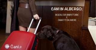 Cani in albergo: quali sono le regole da rispettare e gli oggetti da avere