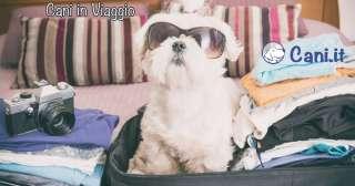 Cane in viaggio: quali sono gli accessori essenziali che non devono mancare