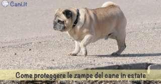 Come proteggere le zampe del cane in estate