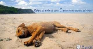 Colpo di sole nel cane: 5 prodotti che aiutano ad evitarlo