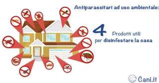 Antiparassitari ad uso ambientale: 4 prodotti utili per disinfestare la casa