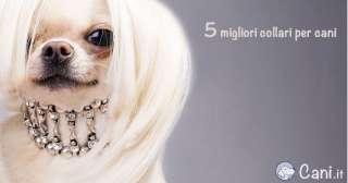 5 migliori collari per cani