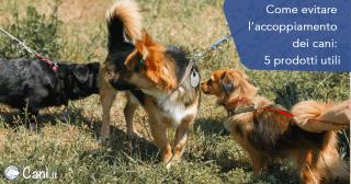 Come evitare l'accoppiamento dei cani: 5 prodotti utili