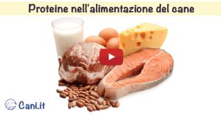Proteine nell'alimentazione del cane