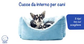 Cucce da interno per cani: 5 tipi tra cui scegliere