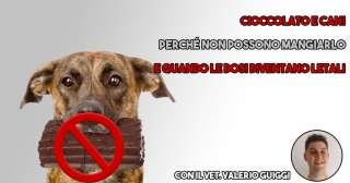 Quali sono i motivi per cui la cioccolata fa male al cane?