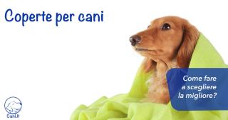 Coperte per cani: come fare a scegliere la migliore?