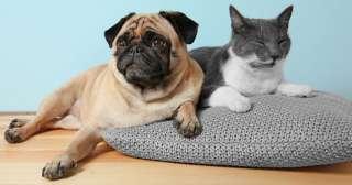 Malattie trasmissibili tra cane e gatto: ecco quali sono