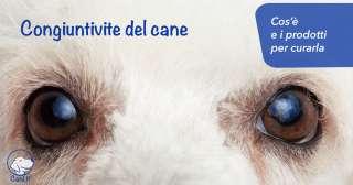 Congiuntivite del cane: cos'è e i prodotti per curarla