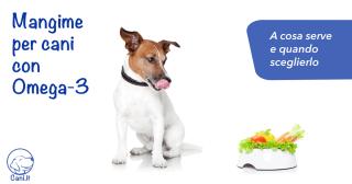 Mangime per cani con Omega-3: a cosa serve e quando sceglierlo