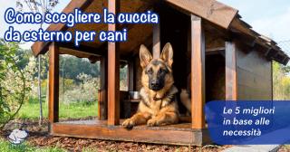 Come scegliere la cuccia da esterno per cani: le 5 migliori in base alle necessità