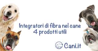Integratori di fibra nel cane: 4 prodotti utili