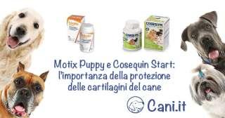 Motix Puppy e Cosequin Start: l'importanza della protezione delle cartilagini del cane