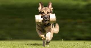 Insegnare il riporto al cane: tecniche e prodotti utili