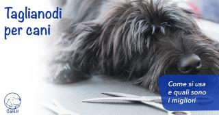 Taglianodi per cani: come si usa e quali sono i migliori